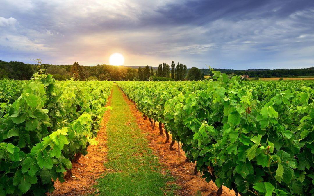 Együtt a bajban: a Kárpátok-bora program továbbra is várja a borászok jelentkezését, az adatlap innen is letölthető